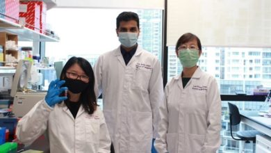 Photo of NTU Singapore scientists develop oral insulin nanoparticles that could one day be an alternative to injections